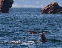 Humpback wieloryba ogonu mieszkanie horyzont Fotografia Stock