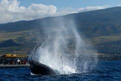 Humpback wieloryba ogonu Policzkować Obrazy Royalty Free