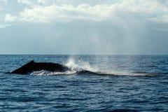 Humpback wieloryba ogonu Policzkować Zdjęcie Royalty Free