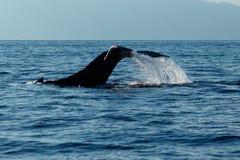 Humpback wieloryba ogonu Policzkować Fotografia Royalty Free