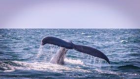 Humpback wieloryba ogonu przedstawienie zdjęcia stock