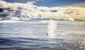 Humpback wieloryby obraz royalty free