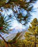 Humphreys Mountain Peak Between Pine Trees Stock Images