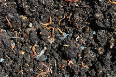 Humus with earthworms Stock Photo