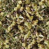 Humus foliage Seamless Tileable Texture Stock Image