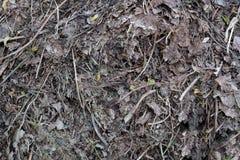 Humus foliage texture Stock Photo