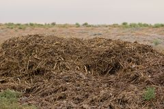 Humus manure with grass. In the park in nature Stock Photography