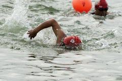 Hun rzeki pływaczki Obrazy Royalty Free