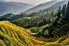 Hunan a terrazze Cina di Longsheng di longji di Wengjia dei giacimenti del riso Immagine Stock Libera da Diritti