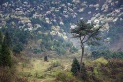 Hunan wiosna Obrazy Royalty Free