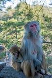 Hunan Zhangjiajie National Forest Park Huangshizhai monkeys Stock Photos