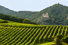 Hunawihr (阿尔萨斯) -城堡和葡萄园 免版税库存照片