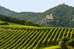 Hunawihr (Эльзас) - замок и виноградник Стоковое фото RF
