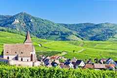 Hunawihr, Alsace. Hunawihr with vineyards in Alsace, France Stock Image