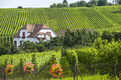 Hunawihr (Alsace) - House and vineyard Royalty Free Stock Photography