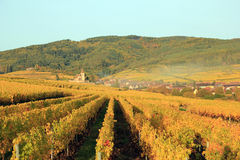 Hunawihr in the vineyard of Alsace. Landscape of the wonderful Alsatian vineyard Royalty Free Stock Photography