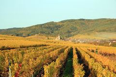 Hunawihr in the vineyard of Alsace. Landscape of the wonderful Alsatian vineyard Royalty Free Stock Photo