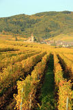 Hunawihr in the vineyard of Alsace. Landscape of the wonderful Alsatian vineyard Royalty Free Stock Image