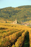 Hunawihr in the vineyard of Alsace. Landscape of the wonderful Alsatian vineyard Royalty Free Stock Photos
