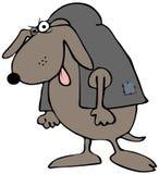 Hunchback Dog Stock Photography
