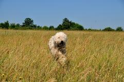 Hund. Lizenzfreies Stockfoto
