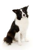 hund arkivfoto
