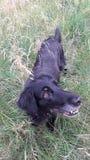 Hund lizenzfreie stockfotos