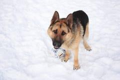 Hund. Lizenzfreies Stockbild