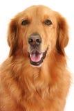 hund Arkivbilder
