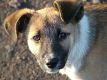 hund Royaltyfri Bild