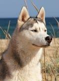hund Arkivbild