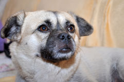 Hund Royaltyfri Foto