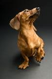 Hund Stockbilder