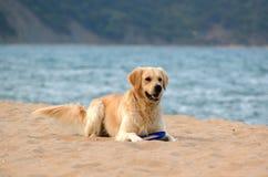 Hund 3 Lizenzfreies Stockfoto