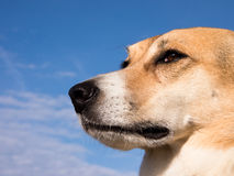 Hund (164) Arkivfoto