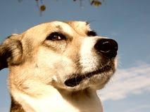 Hund (167) Arkivbilder