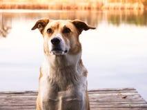 Hund (189) Arkivbilder