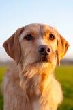 Hund Lizenzfreie Stockfotografie