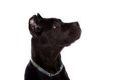 Hund Royaltyfria Foton