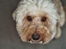 Hund 1 Lizenzfreie Stockfotos