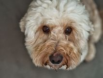 Hund 1 royaltyfria foton
