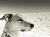 Hund (188) Royaltyfria Foton