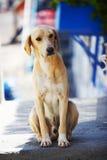 hund Royaltyfria Bilder
