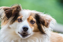Hund Stockbild