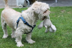 Hund Stockfotos