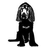 hund 001 Arkivbilder