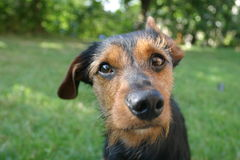 Hund Lizenzfreies Stockbild