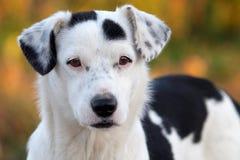 Hund Lizenzfreies Stockfoto