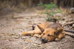 Hund Stockfoto