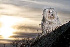 Hund am Abend Stockfoto